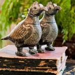 pássaros africanos